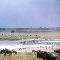 Africa Biome Margaret