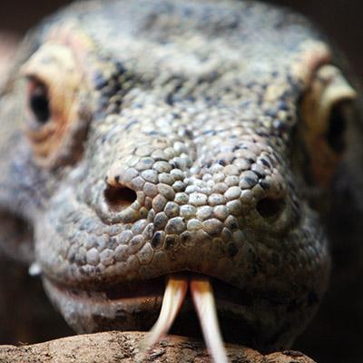 reptile. square