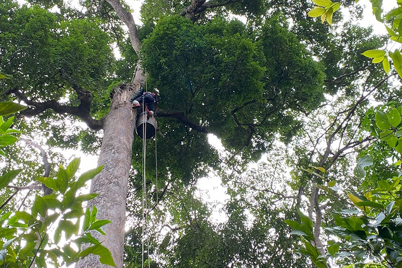 Man hanging an artificial nest in a tree