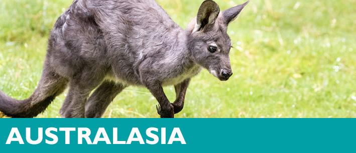Exhibition Displays Australasia Brookvale : Australasia woodland park zoo seattle wa