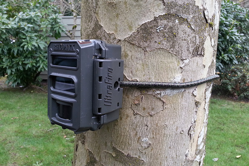Jaguar camera trap