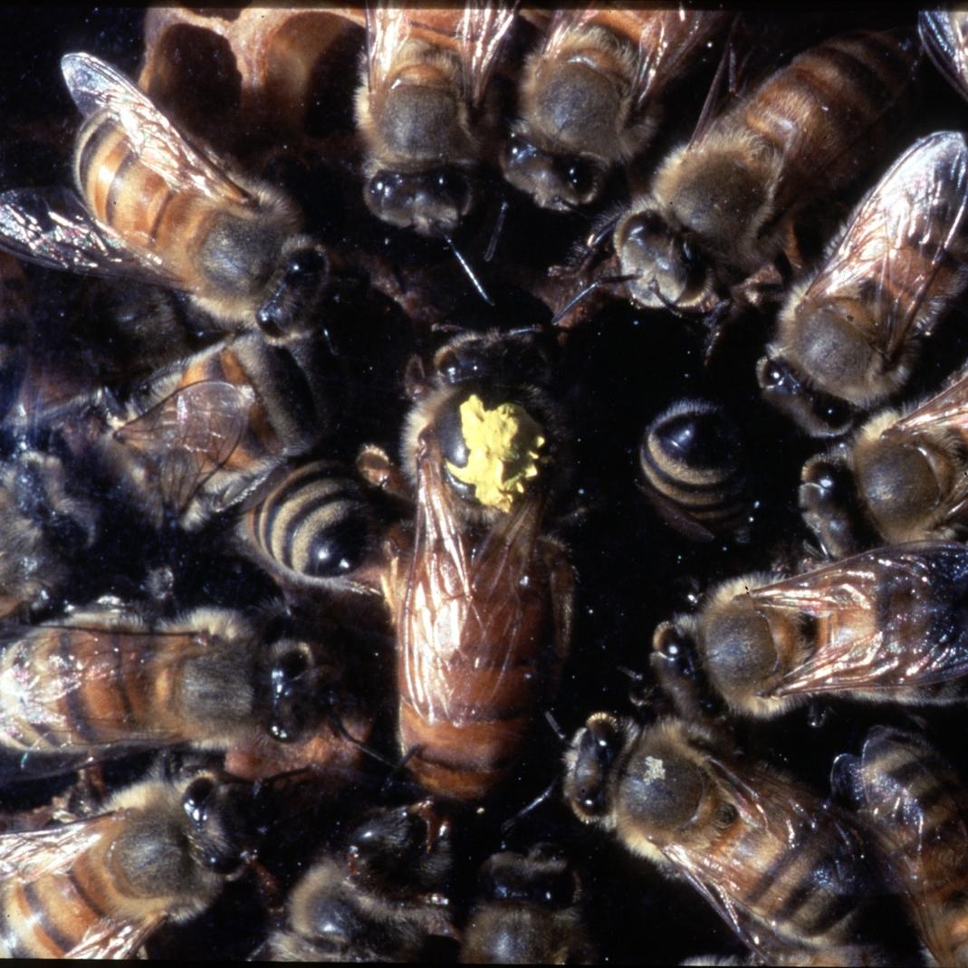 Bees Backyard Habitat