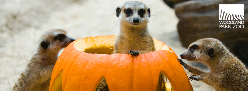 Meerkat Halloween Facebook Cover