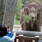 Elephant Feeding*
