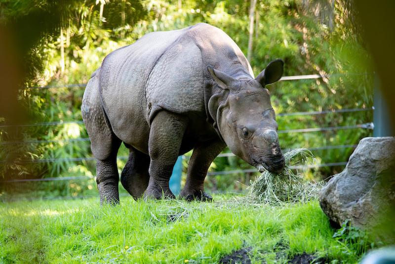 Rhino Glenn at Assam Rhino Reserve