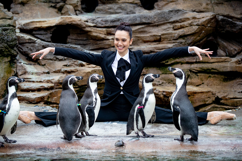 Pacific Northwest Ballet dancer with penguins