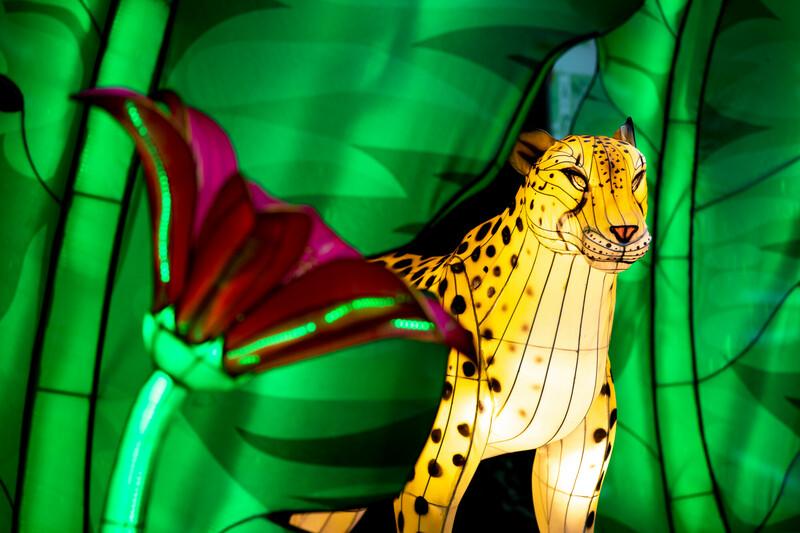 Jaguar in a jungle lantern scene