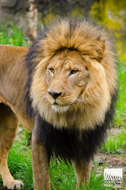 Mammals Woodland Park Zoo Seattle Wa
