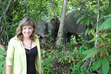 hutan elephant conservation