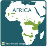 African lion range map 10