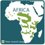 African elephant range map 10