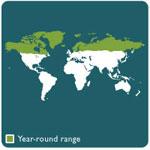 Arctic fox range map 10
