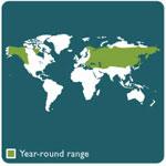 brown bear range map
