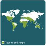 rabbit range map