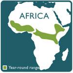 Guereza monkey range map