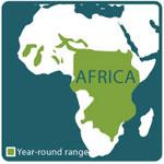 Hippo range map