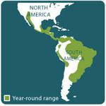 ocelot range map