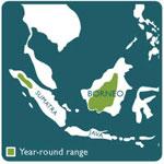 orangutan range map