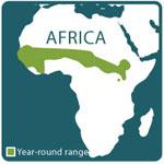 patas monkey range map