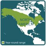 porcupine range map