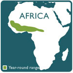 duiker range map
