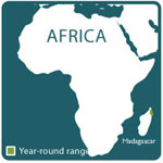 red ruffed lemur range map