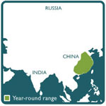 Muntjac range map