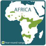 Giraffe range map