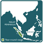 Sumatran tiger range map