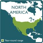 kestrel range map