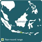 bali mynah range map