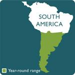 coscoroba swan range map