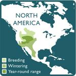 ferruginous hawk range map