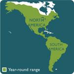 great horned owl range map