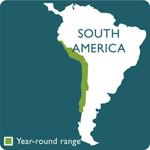humboldt penguin range map