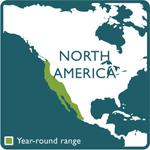 screech owl range map