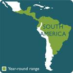 spectacled owl range map