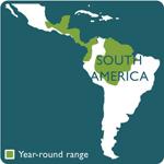 sunbittern range map