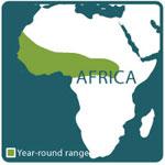Aruba Island rattlesnake range map