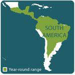 Boa constrictor range map