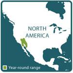 rosy boa range map