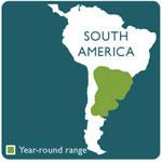yesllow anaconda range map