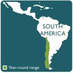 chilean rose tarantula rnage map