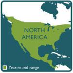 darkling beetle range map