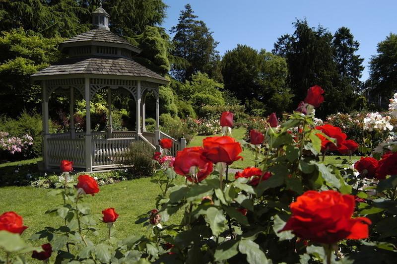 WP Rose Garden 2
