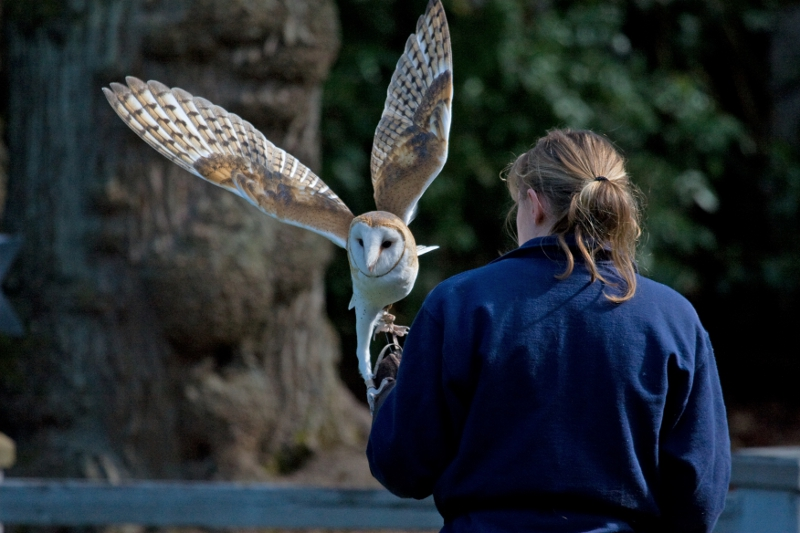 Zookeeping as a Career Woodland Park Zoo Seattle WA – Zookeeper Job Requirements