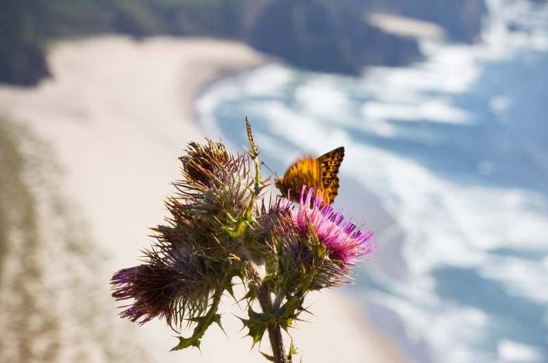 Living Northwest - Northwest Butterfly Recovery