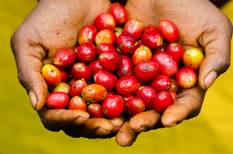 PNG Conservation Coffee