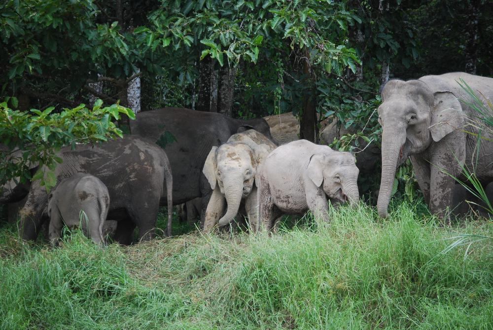 Hutan elephant