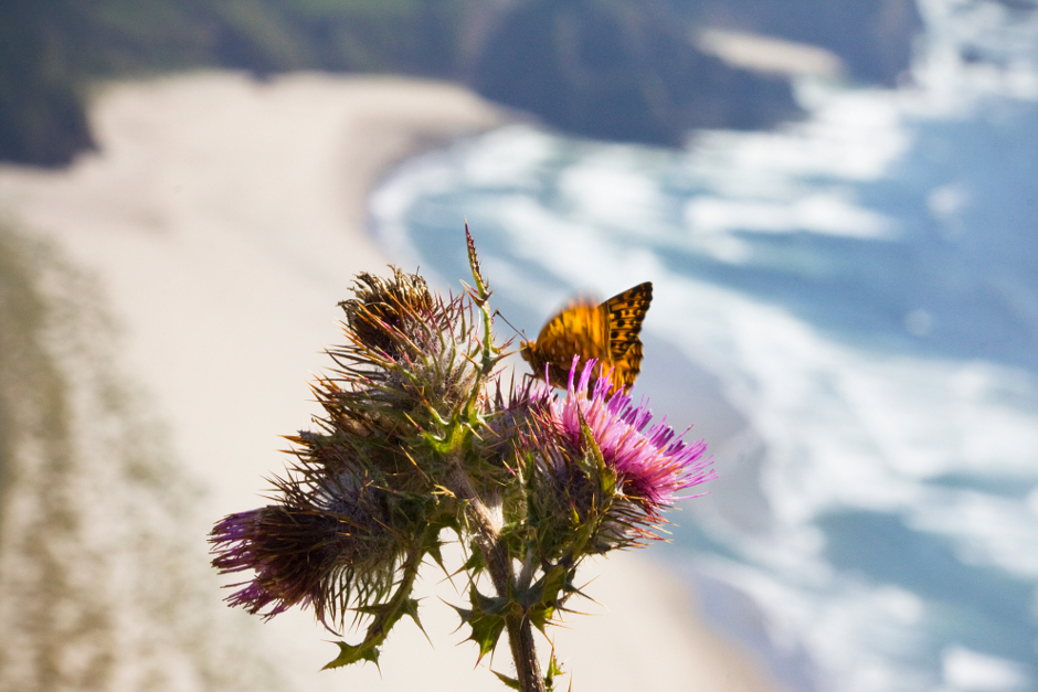 Butterflies of the Northwest